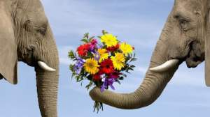 Funny-Elephant-Backgrounds-1-500x281
